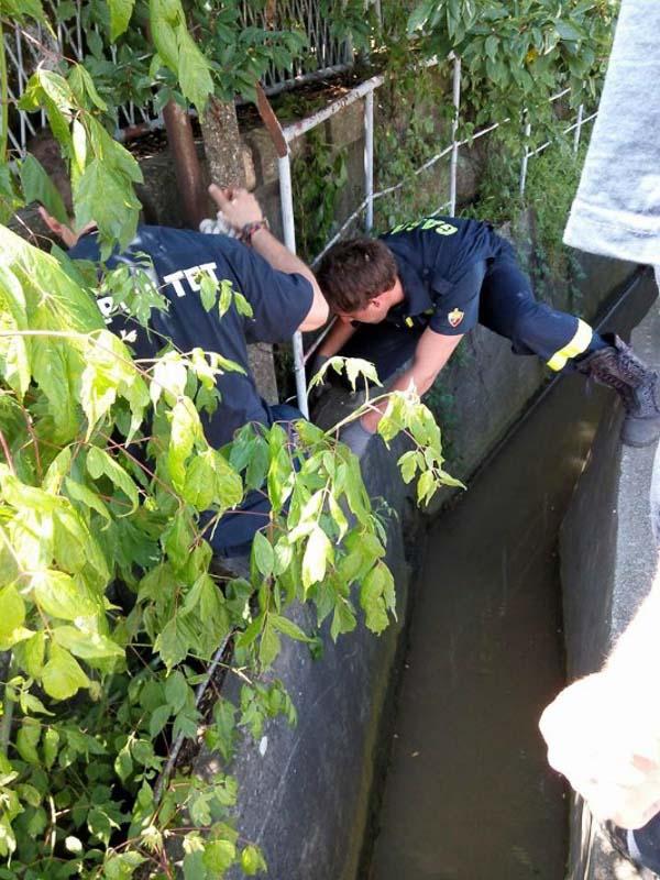 Resevanje malega psa ki je padel v kanal